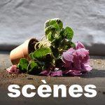 titre-scenes